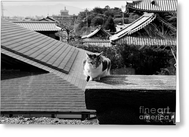 Kyoto Kat Greeting Card by Dean Harte