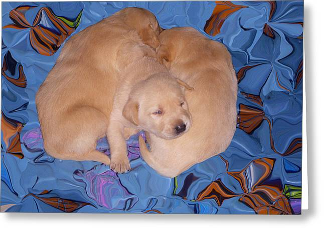 Lab Pups 2 Greeting Card by Aimee L Maher Photography and Art Visit ALMGallerydotcom