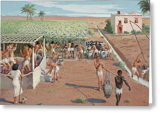 Laborers Harvest Grapes And Press Greeting Card
