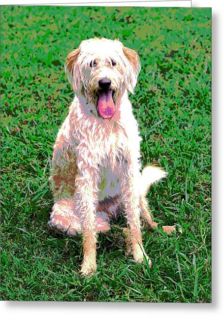 Labradoodle Greeting Card by Dorrie Pelzer