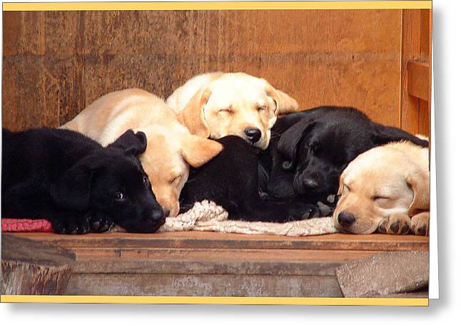 Labrador Puppies Sleeping Greeting Card