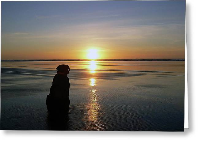 Labrador Watching The Sun Set Greeting Card