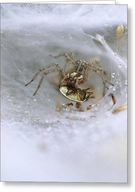 Labyrinth Spider Greeting Card by Adrian Bicker