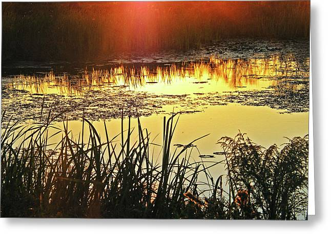 Greeting Card featuring the photograph Lacassine Sundown by Lizi Beard-Ward