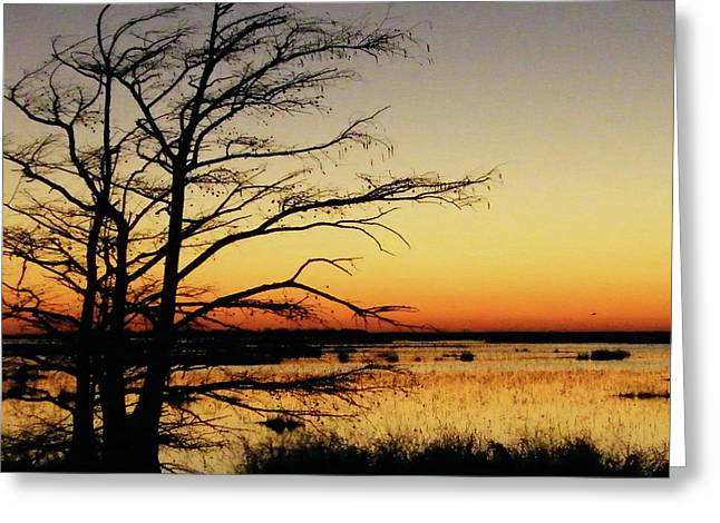 Greeting Card featuring the photograph Lacassine Sunset by Lizi Beard-Ward