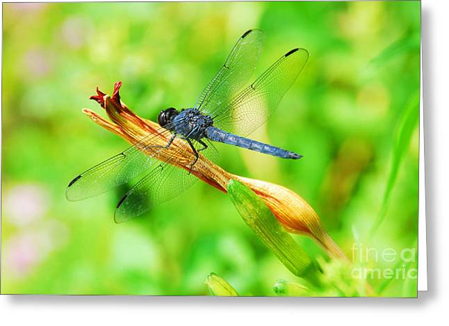 Greeting Card featuring the photograph Lace Wings by Cindy Manero