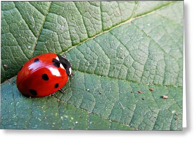 Ladybird Greeting Card by Olivia Narius