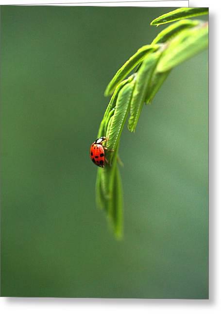 Ladybug 1 Greeting Card by Pan Orsatti