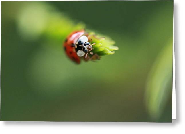 Ladybug 2 Greeting Card by Pan Orsatti