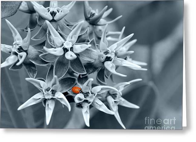 Ladybug Flower Greeting Card