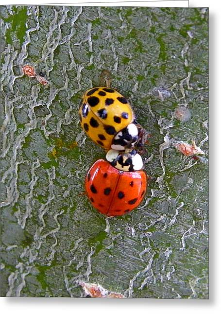 Ladybug Love Greeting Card by Judy Wanamaker