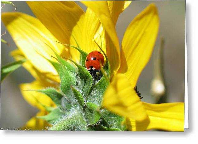 Greeting Card featuring the photograph Ladybug by Mitch Shindelbower