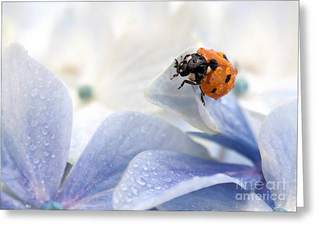 Ladybug Greeting Card by Nailia Schwarz