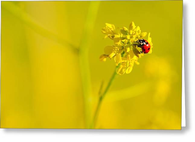 Ladybug On Yellow Flower Greeting Card by Hegde Photos