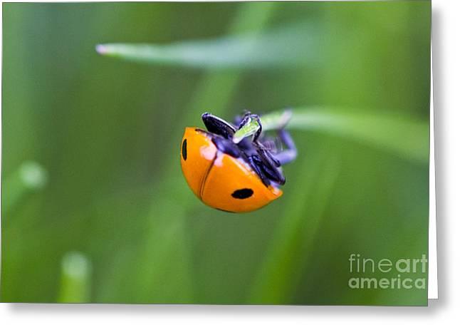 Ladybug Topsy Turvy Greeting Card by Donna Munro
