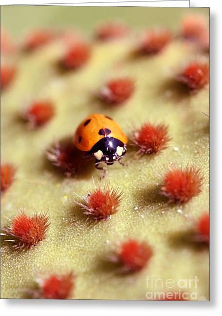 Ladybug2 Greeting Card
