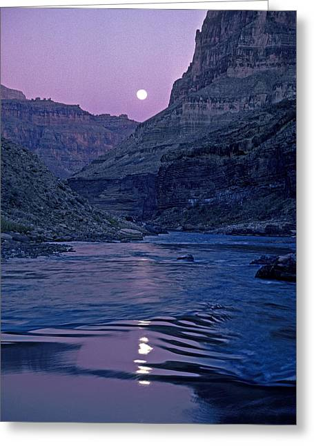 Lake Light On Colorado River,grand Greeting Card by David Edwards