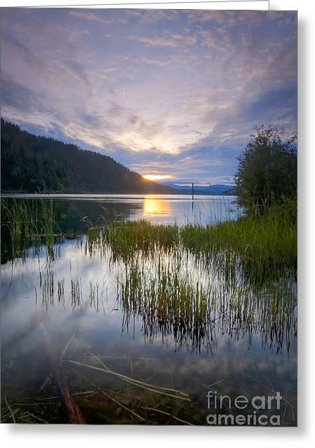 Lake Reeds Greeting Card by Idaho Scenic Images Linda Lantzy