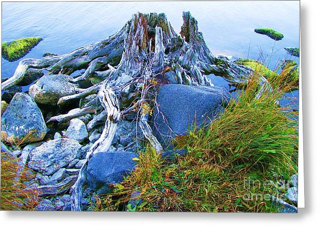 Greeting Card featuring the photograph Lake Shore Weathered Stump by Michele Penner