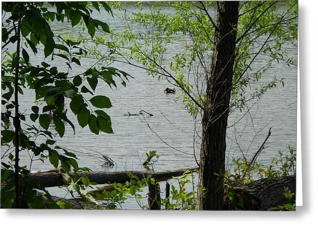 Lake View Greeting Card by Craig Keller