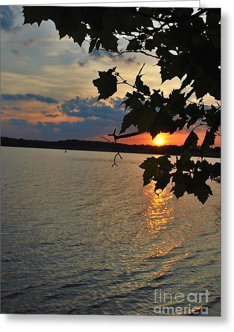 Lakeset Leaves Greeting Card by TSC Photography Timothy Cuffe Jr