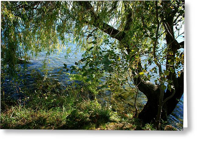 Lakeside Tree Greeting Card by Kathleen Grace