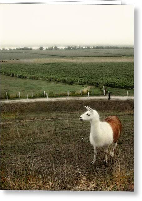 Lama Greeting Card