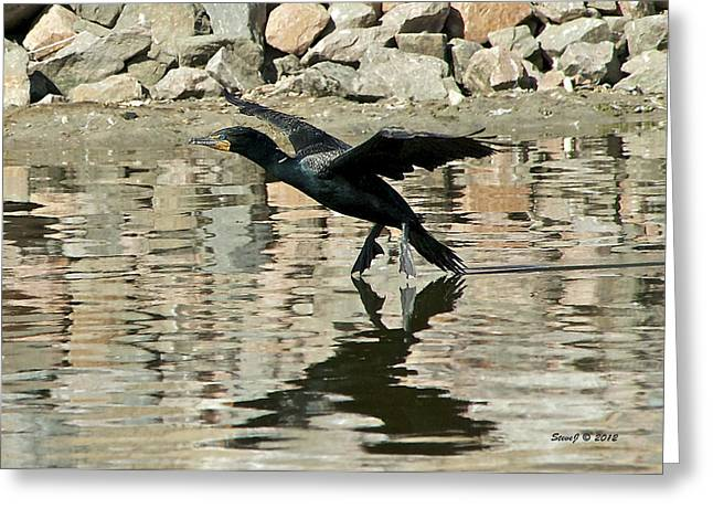 Greeting Card featuring the photograph Landing Cormorant by Stephen  Johnson