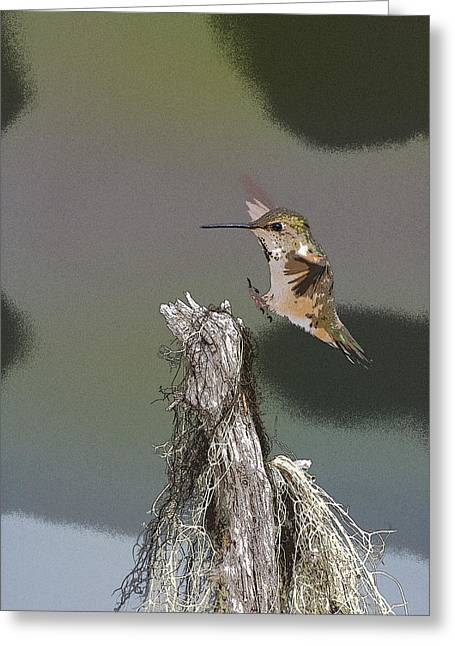 Landing Hummer- Abstract Greeting Card by Tim Grams