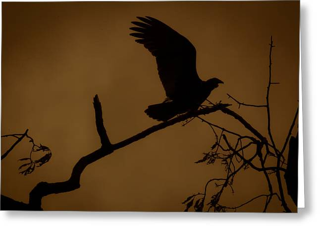 Landing  Greeting Card by Kim Henderson