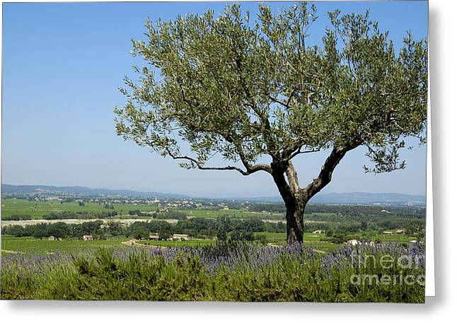 Landscape Of Provence. France Greeting Card by Bernard Jaubert