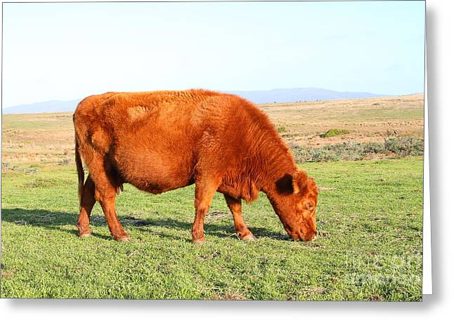 Landscape With Cow Grazing In The Field . 7d9933 Greeting Card by Wingsdomain Art and Photography