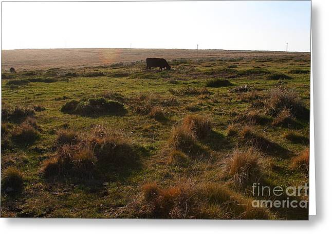Landscape With Cow Grazing In The Field . 7d9935 Greeting Card