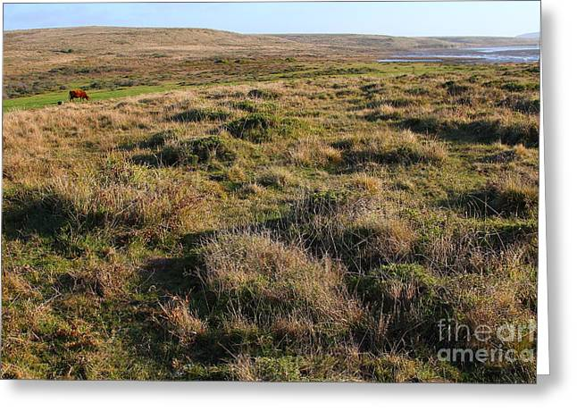 Landscape With Cow Grazing In The Field . 7d9942 Greeting Card