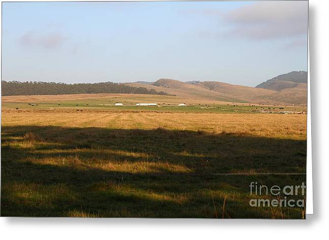 Landscape With Cows Grazing In The Field . 7d9966 Greeting Card