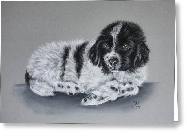 Landseer Pup Greeting Card by Patricia Ivy