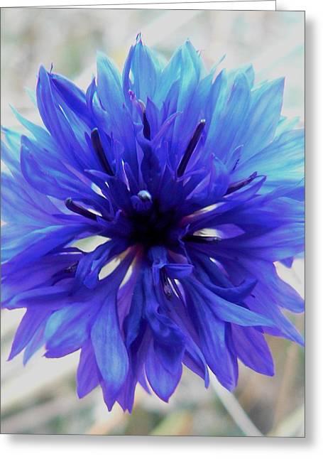 Lapis Lazuli Greeting Card by Barbara St Jean