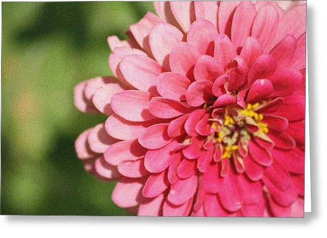 Greeting Card featuring the photograph Large Pink Zinnia by Donna  Smith