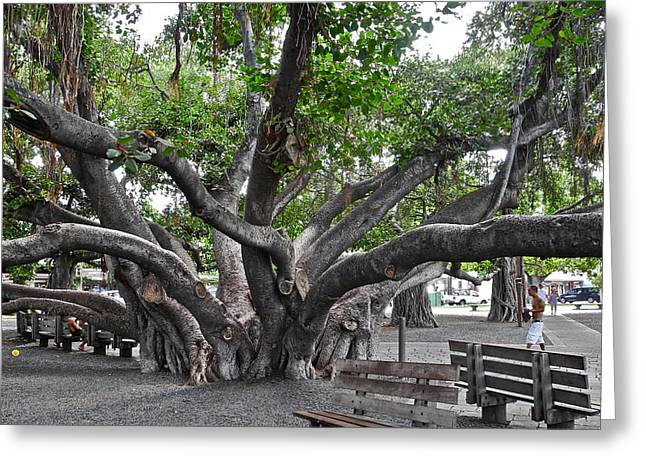 Greeting Card featuring the photograph Largest Banyan Tree In The Usa by Kirsten Giving