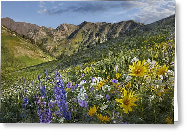 Larkspur And Sunflowers Albion Basin Greeting Card