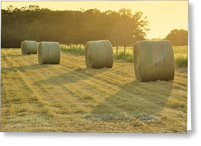 Last Glow Of The Day Greeting Card by Jan Amiss Photography