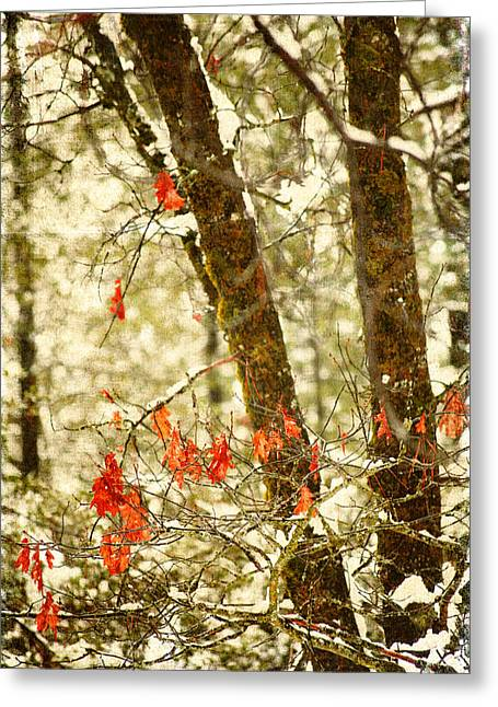 Last Leaves Clinging Greeting Card by Bonnie Bruno