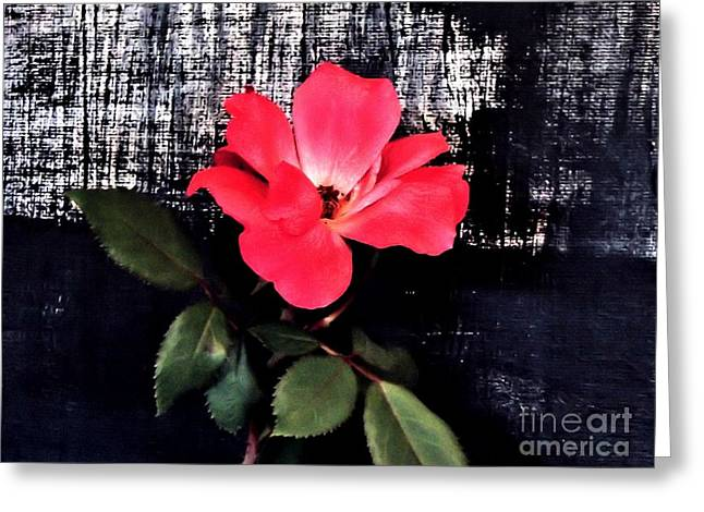Last Rose Of The Summer Greeting Card by Marsha Heiken