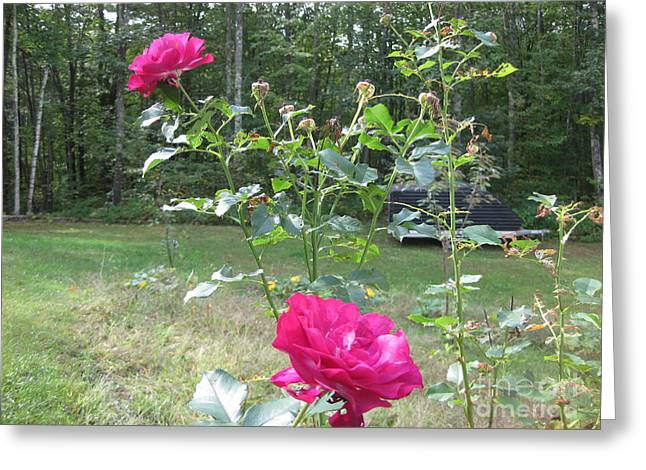 Last Roses Of The Summer For Mother  Greeting Card