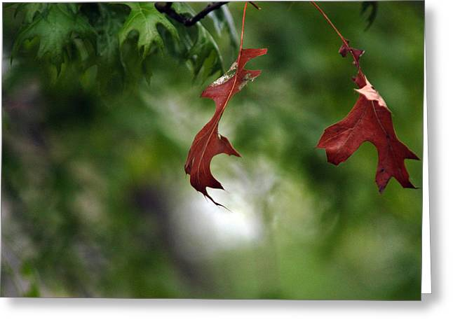 Greeting Card featuring the photograph Last To Fall by Wanda Brandon