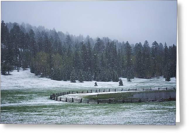 Late Season Snowstorm Greeting Card by C Thomas Willard
