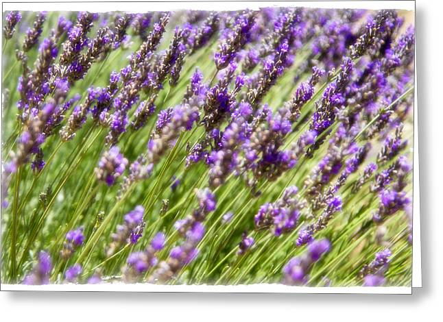 Greeting Card featuring the photograph Lavender 2 by Ryan Weddle