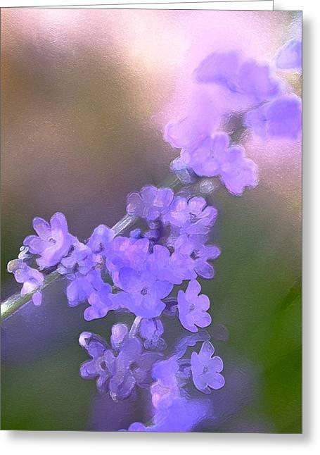 Lavender 3 Greeting Card by Pamela Cooper