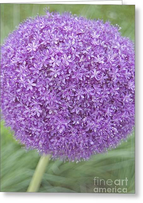 Lavender Ball Greeting Card