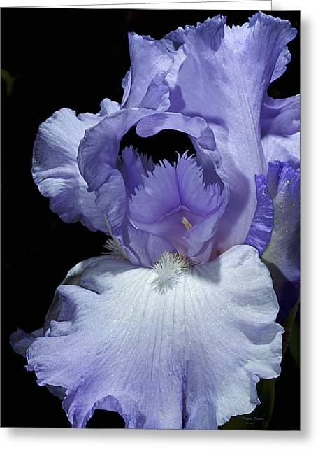 Lavender Blue Iris Greeting Card